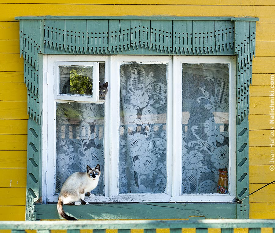 Cats on a ornate window frames