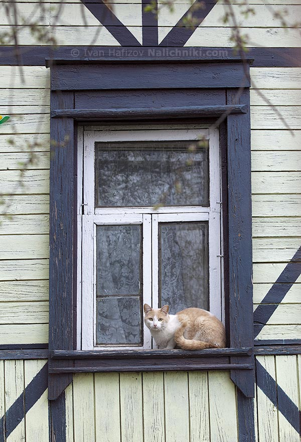 The red cat on window-sill